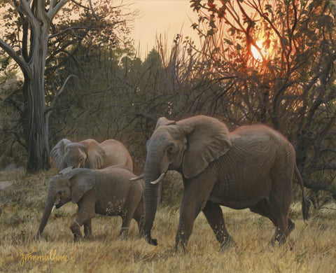 Sundown Elephants -  John Mullane - McGaw Graphics