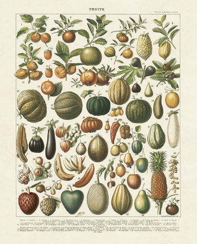 Fruits I -  Adolphe Millot - McGaw Graphics