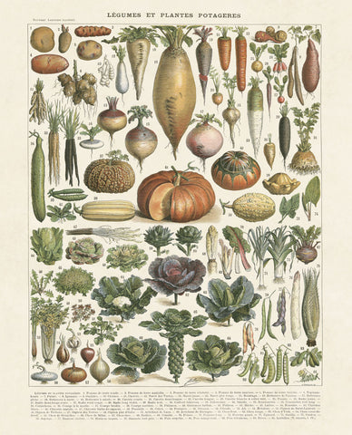 Legumes II -  Adolphe Millot - McGaw Graphics