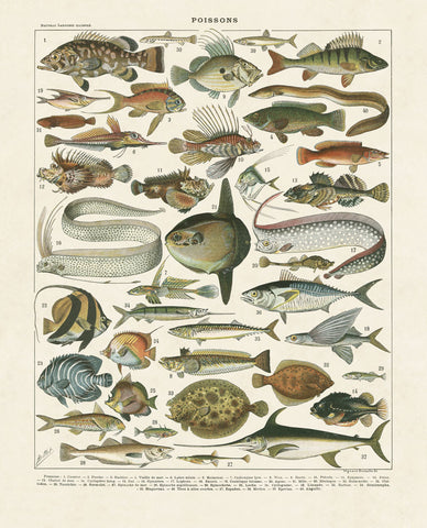Poissons I -  Adolphe Millot - McGaw Graphics