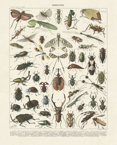 Insectes II -  Adolphe Millot - McGaw Graphics