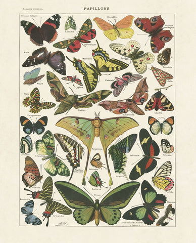 Papillons I -  Adolphe Millot - McGaw Graphics