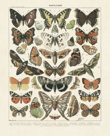 Papillons II -  Adolphe Millot - McGaw Graphics