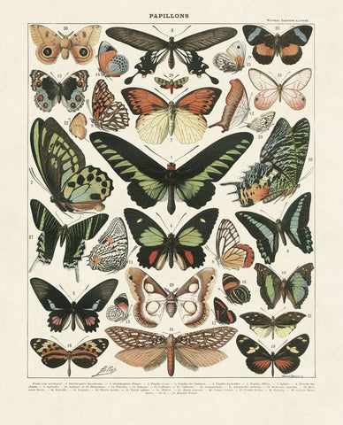 Papillons III -  Adolphe Millot - McGaw Graphics