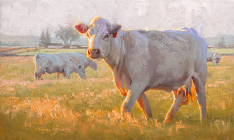 Charolais -  Mark McKenna - McGaw Graphics