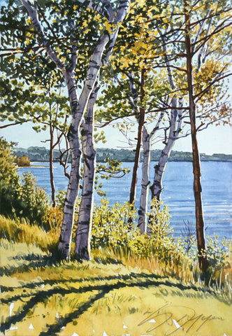 Birch Trees on the Bay