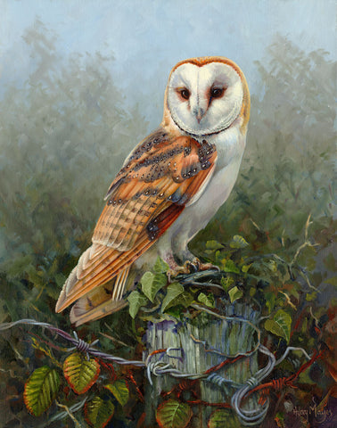 Barn Owl -  Hilary Mayes - McGaw Graphics