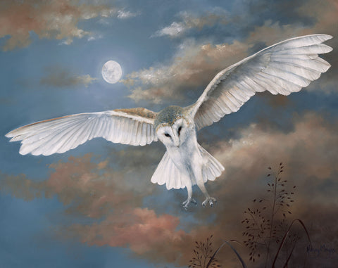 Barn Owl in Flight -  Hilary Mayes - McGaw Graphics