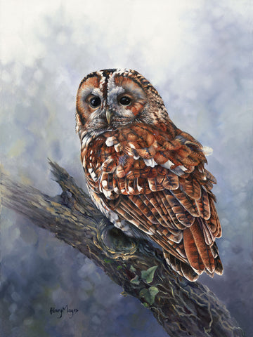 Tawny Owl -  Hilary Mayes - McGaw Graphics