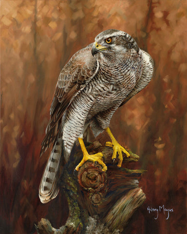 Goshawk -  Hilary Mayes - McGaw Graphics