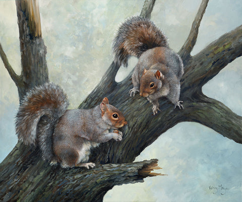 Grey Squirrels -  Hilary Mayes - McGaw Graphics