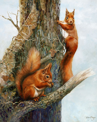 Red Squirrels -  Hilary Mayes - McGaw Graphics