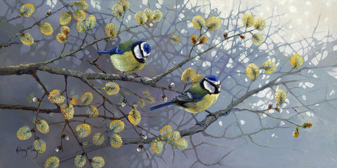 Blue Tits -  Hilary Mayes - McGaw Graphics