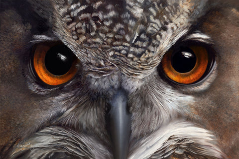 Night Vision - European Eagle Owl -  Hilary Mayes - McGaw Graphics
