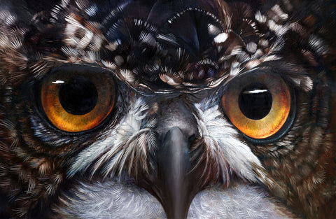 Owl Eyes - African Spotted Eagle Owl -  Hilary Mayes - McGaw Graphics