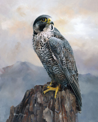 Peregrine Falcon -  Hilary Mayes - McGaw Graphics