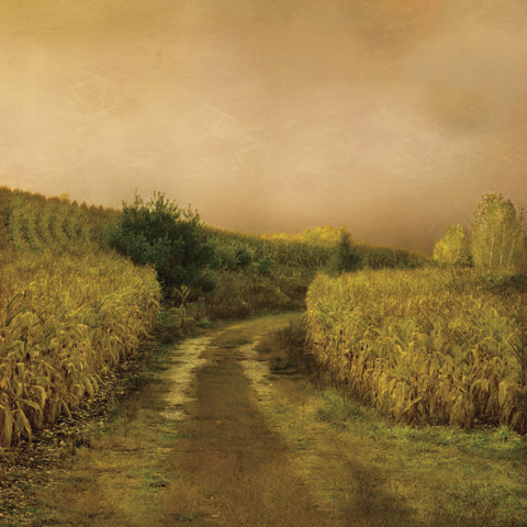 Sunset Cornfield -  Dawne Polis - McGaw Graphics