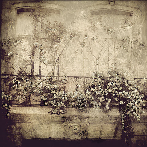 Dawne Polis - Paris Window Garden