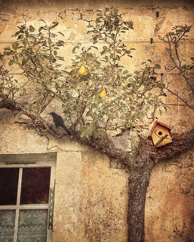 Dawne Polis - Espaliered Apple, Crow and Birdhouse