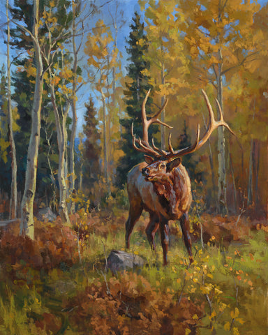 Chad Poppleton - Bull in Fall Aspens