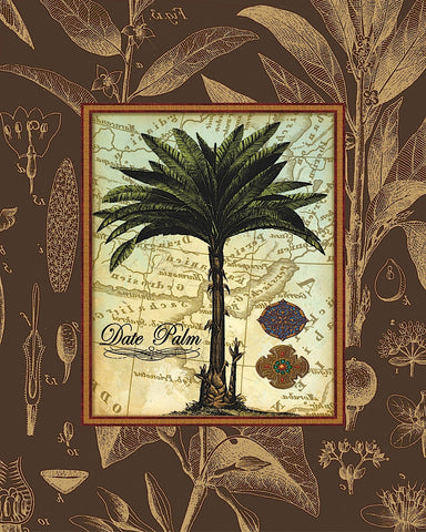 Date Palm -  Karl Rattner - McGaw Graphics
