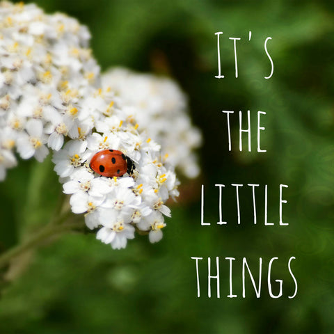 The Little Things -  R Delean Designs - McGaw Graphics
