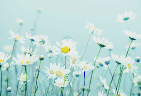 Dancing Daisies -  R Delean Designs - McGaw Graphics