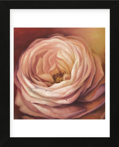 Rose Portrait (Framed) -  Lisa Audit - McGaw Graphics