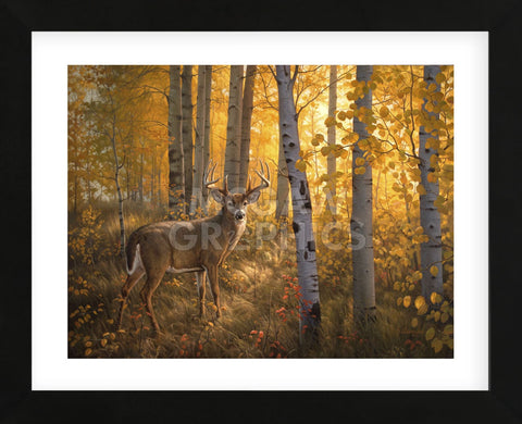 Whitetail in Aspens (Framed) -  Greg Alexander - McGaw Graphics