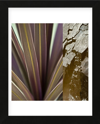 Desert Jewels II (Framed) -  Sidney Aver - McGaw Graphics