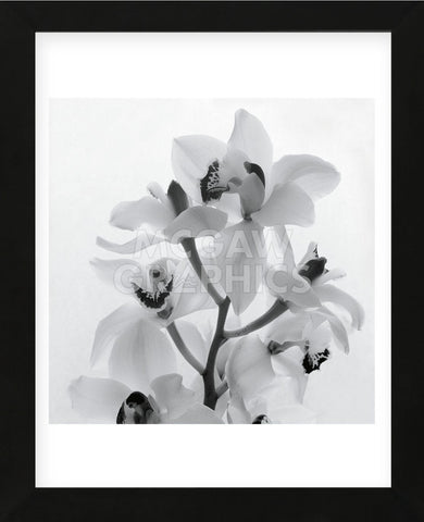 Tom Artin - Orchid Spray I