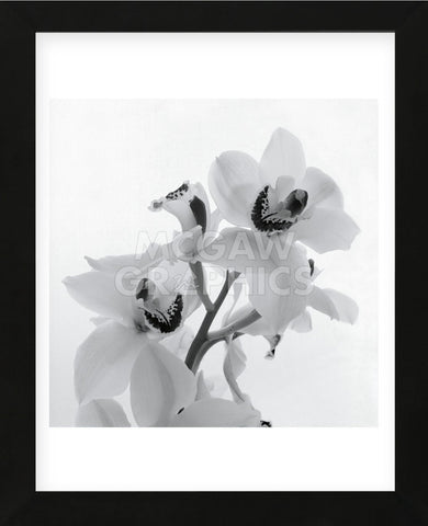 Tom Artin - Orchid Spray II