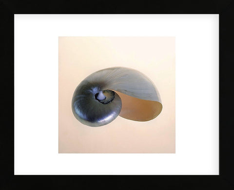 Polished Nautilus  (Framed) -  Tom Artin - McGaw Graphics