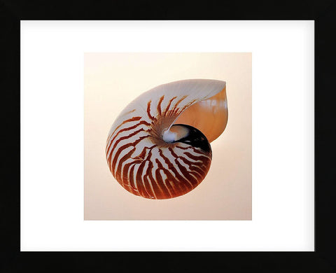 Nautilus  (Framed) -  Tom Artin - McGaw Graphics