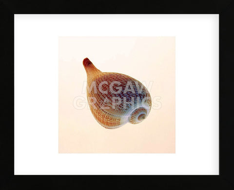 Fig Shell  (Framed) -  Tom Artin - McGaw Graphics
