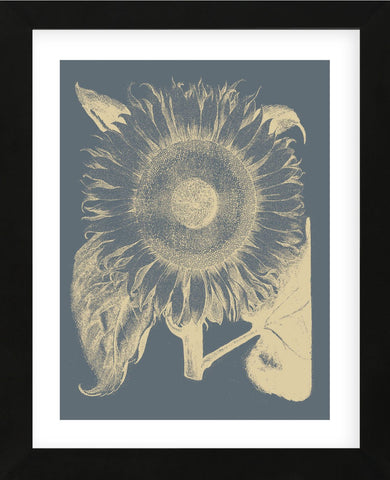 Sunflower 2 (Framed) -  Botanical Series - McGaw Graphics