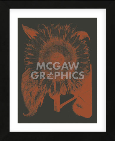 Sunflower 10 (Framed) -  Botanical Series - McGaw Graphics