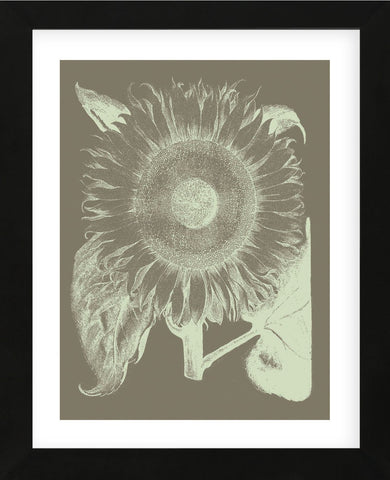 Sunflower 12 (Framed) -  Botanical Series - McGaw Graphics