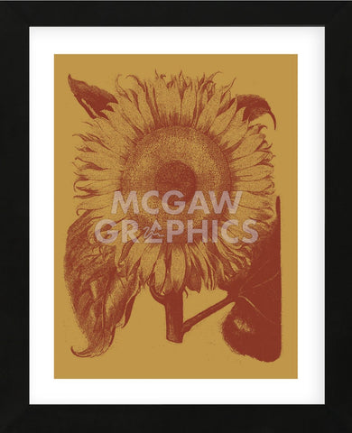 Sunflower 15 (Framed) -  Botanical Series - McGaw Graphics