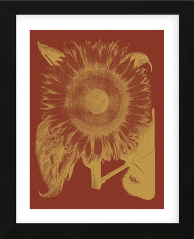 Sunflower 16 (Framed) -  Botanical Series - McGaw Graphics