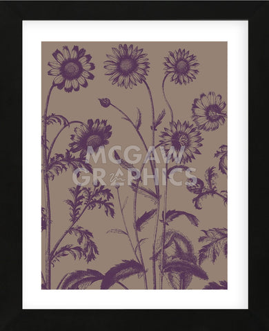 Chrysanthemum 14 (Framed) -  Botanical Series - McGaw Graphics