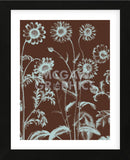 Chrysanthemum 17 (Framed) -  Botanical Series - McGaw Graphics