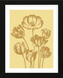 Tulip 19 (Framed) -  Botanical Series - McGaw Graphics