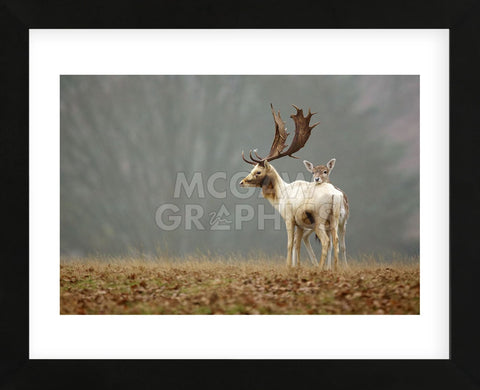 Fallow Love (Framed) -  Mark Bridger - McGaw Graphics