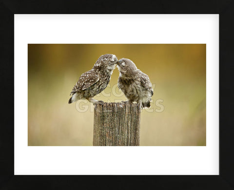 Another Little Peck (Framed) -  Mark Bridger - McGaw Graphics