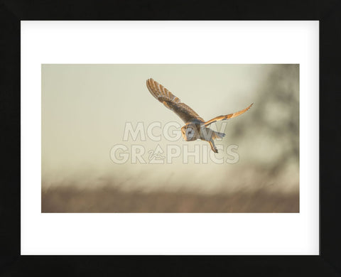 Soft Light (Framed) -  Mark Bridger - McGaw Graphics