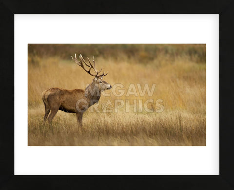 Deerscape (Framed) -  Mark Bridger - McGaw Graphics