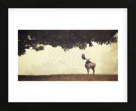 Look Back (Framed) -  Mark Bridger - McGaw Graphics