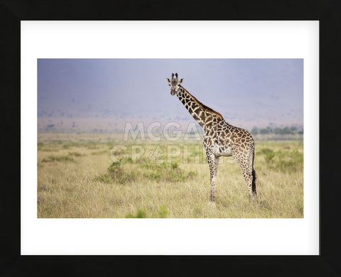 Little Lady (Framed) -  Mark Bridger - McGaw Graphics