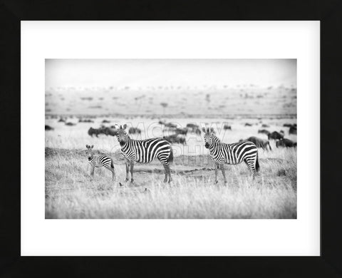Mark Bridger - Stripes